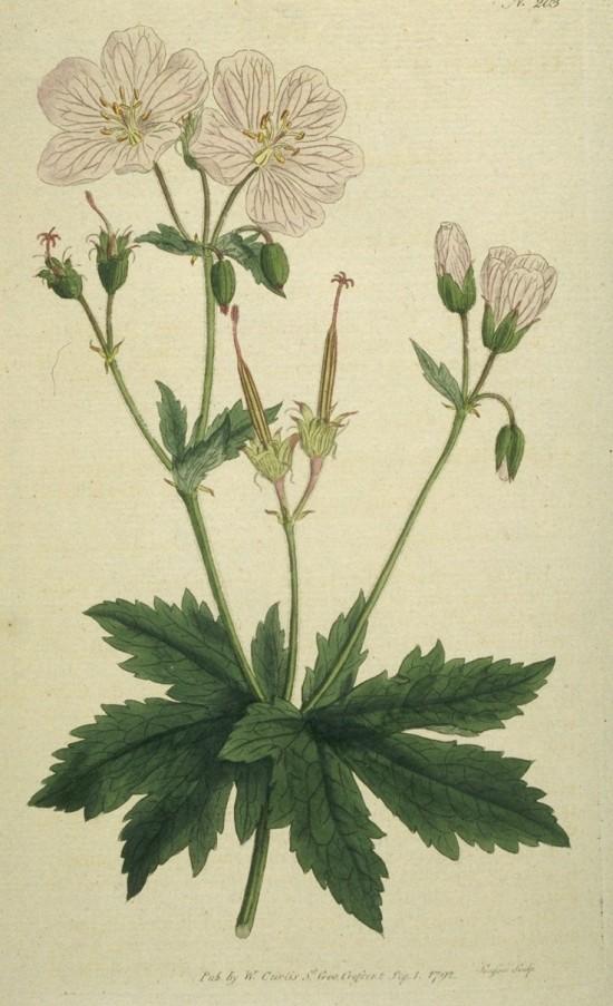 botanical prints_nal