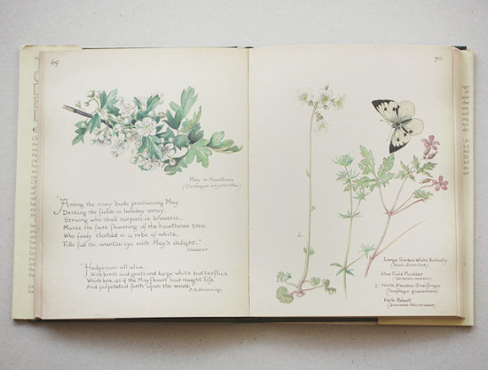 the country diary if an edwardian lady