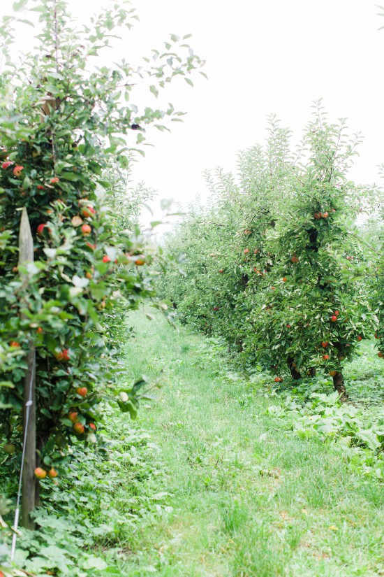 View More: http://anouschkarokebrand.pass.us/orchard